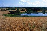 Vegetasjonssoner – effektive filtre for jord, næringsstoffer og plantevernmidler